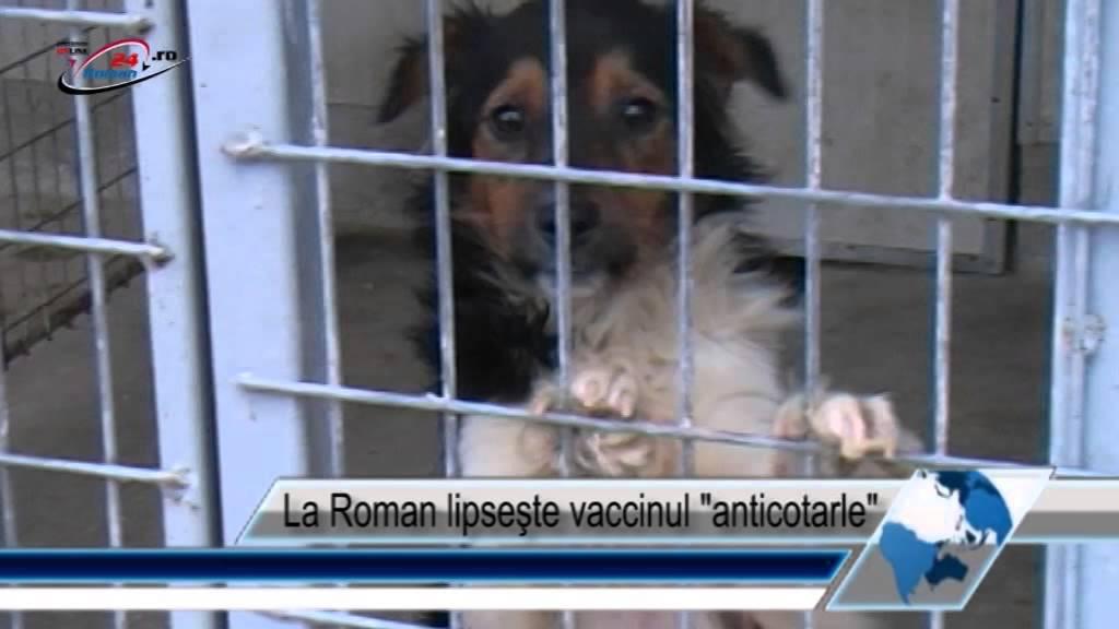 La Roman lipseşte vaccinul anticotarle