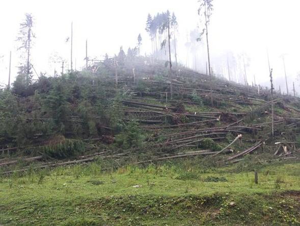 500.000 de arbori, de pe 600 de hectare de pădure, dezastru!
