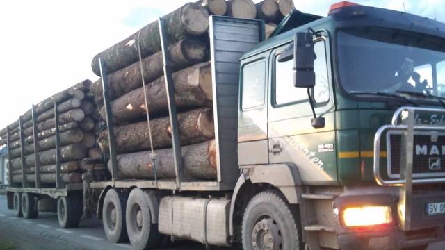 Actiuni pentru protejarea padurilor si prevenirea taierilor ilegale