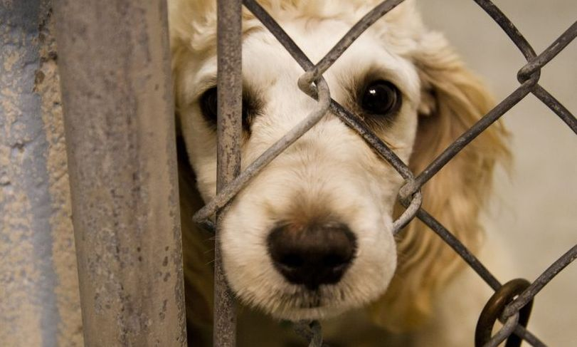 S-a votat: VIOLENȚA împotriva animalelor, pedepsită cu ÎNCHISOARE