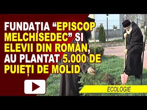 ACTIUNE DE PLANTARE PUIETI DE MOLID IN ROMAN