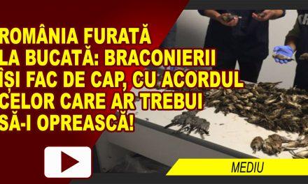 ROMÂNIA FURATĂ ȘI DE CIOCÂRLII