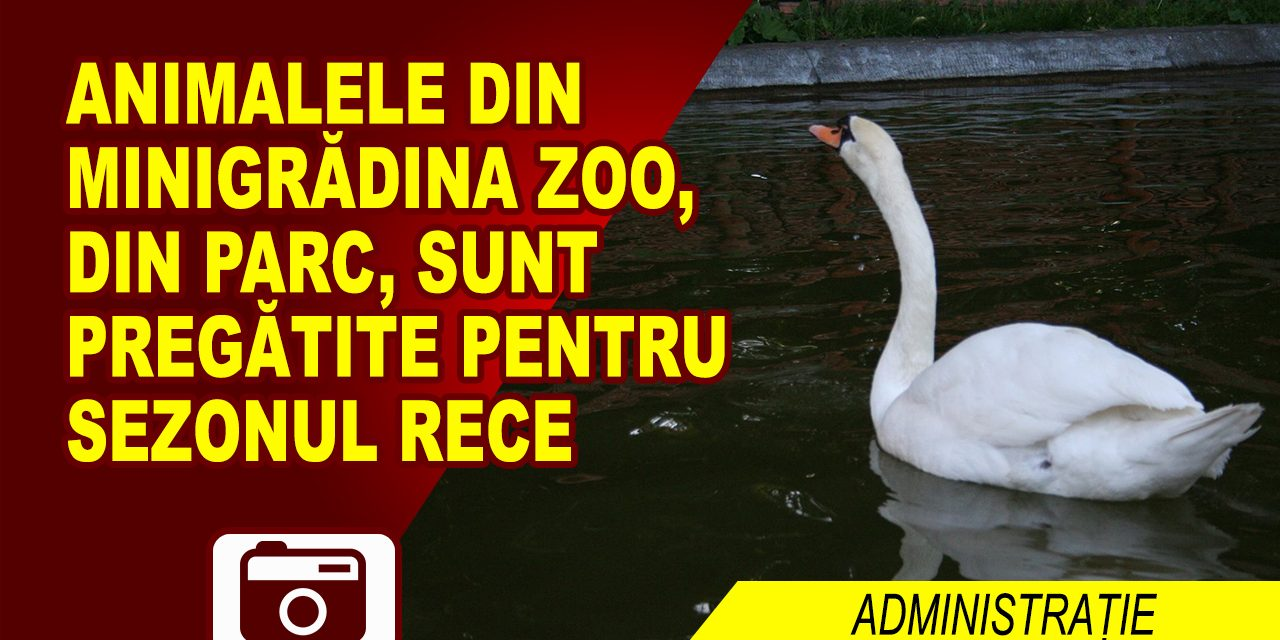 ANIMALELE DIN PARC, PREGĂTITE SĂ ÎNFRUNTE IARNA