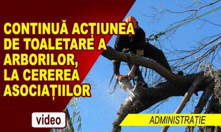 CONTINUA TOALETAREA ARBORILOR LA CEREREA ASOCIATIILOR